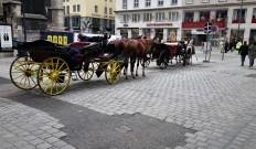 Pflaster Wien Fiaker Stephansdom
