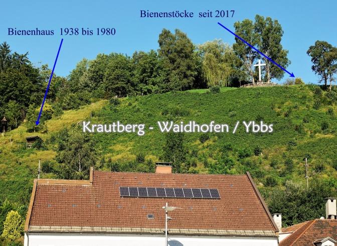 Bienen Krautbergkreuz August 2017