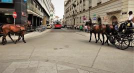 Wien Sepz 2017 Pflaster weg