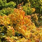 Herbst in Waidhofen !