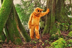 Ötscherbär im Urwald