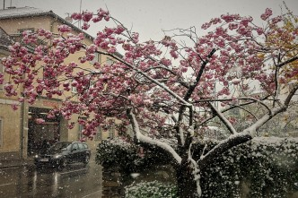 Schnee Blüten 2 19.4.2017 Mühlstrasse
