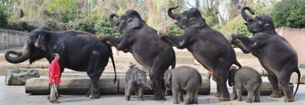 elefanten_dompteur