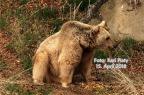 Die Bären vom Ötscher