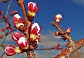 Blüten Wachau 14.4.2014 i