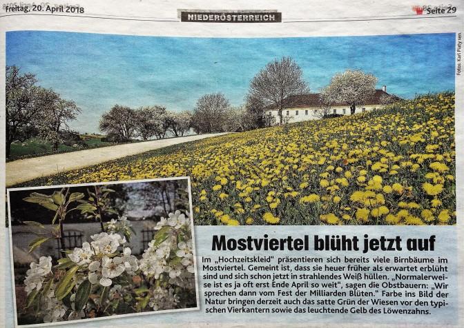 Mostblüte Krone 20.4.2018 Foto Piaty