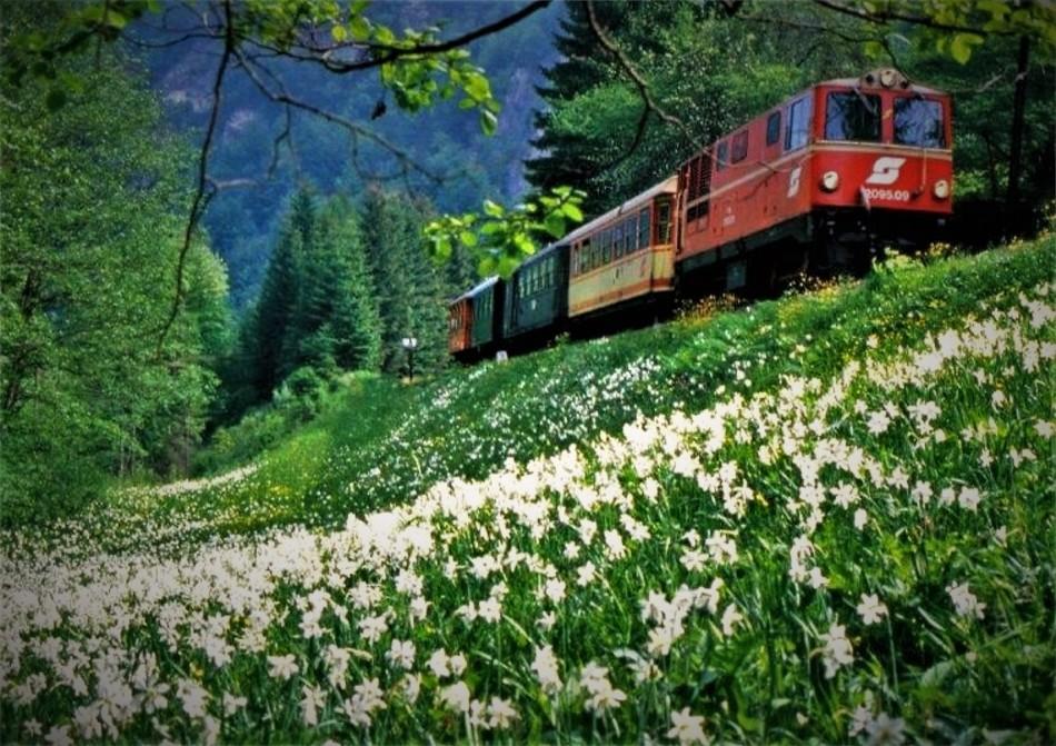 Eisenbahn Narzissen 28. Mai 1980