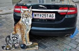 Luchs und Waschbär Rigler Jaguar