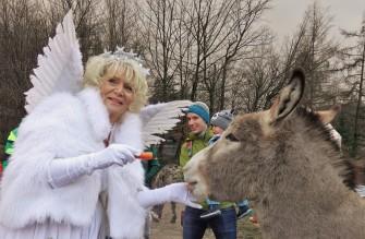Tierpark mit Christkindl 2018 Esel 3
