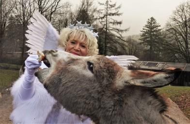 Tierpark mit Christkindl 2018 Esel nahe