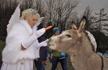 Tierpark mit Christkindl 2018 Esel