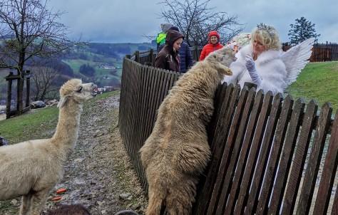 Tierpark mit Christkindl 2018 Schaf