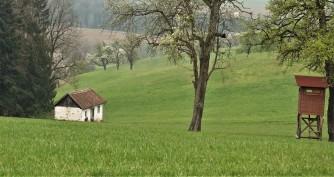 Das Häuschen der Ötscherbärin 2 (1)