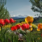 Ötscherblick im April