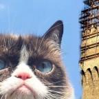Grumpy Cat ist tot